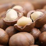 Sấy lạnh hạt macca hay sấy khô hạt macca bằng phương pháp sấy nóng ?