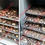 Máy sấy lạnh nông sản, phương pháp sấy khô nông sản chất lượng cao