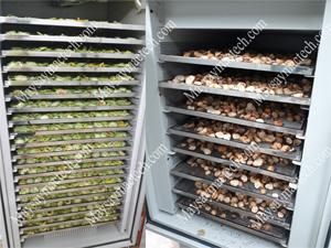 Máy sấy lạnh rau củ quả, các loại máy sấy thông dụng hiện nay