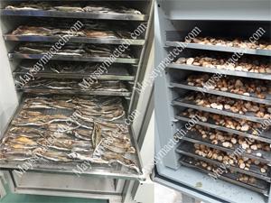 Máy sấy lạnh thực phẩm, thiết bị sấy khô thực phẩm chất lượng cao