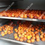 Máy sấy lạnh trái cây, tìm hiểu phương pháp sấy khô phù hợp nhất