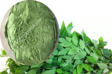 Rau ngót sấy lạnh, sấy khô giữ màu xanh và bảo toàn dinh dưỡng