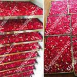 Cánh hoa hồng sấy khô bằng máy sấy lạnh giữ màu sắc rất đẹp