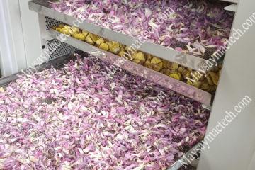 Cách làm hoa sen khô, sấy khô theo phương pháp lạnh, giữ màu đẹp
