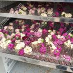 Máy sấy lạnh hoa hồng, sấy hoa khô nhanh và giữ màu đẹp