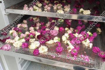 Nhiệt độ sấy hoa hồng phù hợp, giữ màu sắc đẹp, giữ chất dinh dưỡng
