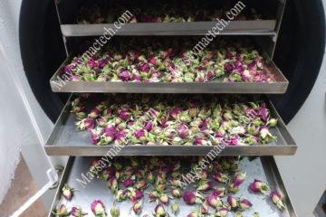 Sấy khô nụ hoa hồng bằng phương pháp nào, sấy lạnh hay sấy thăng hoa