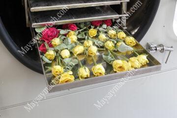 Sấy khô bông hoa hồng giữ hình dạng bằng sấy lạnh hay sấy thăng hoa