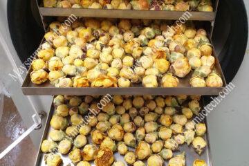 Sấy khô hoa trà vàng trên sấy lạnh hay sấy thăng hoa để hình dạng đẹp