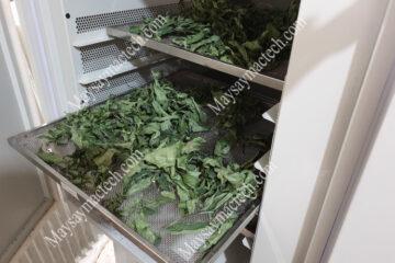 Sấy khô lá tam thất trên máy sấy lạnh, khô nhanh, giữ màu sắc