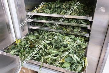 Lá sâm ngọc linh sấy khô bằng máy sấy lạnh cho chất lượng tốt