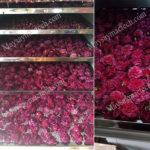 Máy sấy hoa hồng, phù hợp sấy hoa làm trà, khô nhanh, màu đẹp