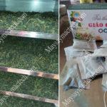 Máy sấy giảo cổ lam, phương pháp sấy lạnh đáp ứng chất lượng cao