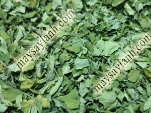 Chùm ngây sấy khô bằng phương pháp sấy lạnh, giữ màu xanh tự nhiên