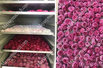 Sấy khô hoa hồng bằng máy sấy lạnh, tham khảo khách hàng của Mactech