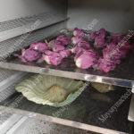 Hoa sen sấy khô bằng phương pháp sấy lạnh cho màu sắc đẹp