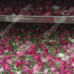 Cách sấy trà hoa hồng, phương pháp được áp dụng phổ biến hiện nay