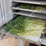 Sấy lạnh rau cần, phương pháp sấy rau củ giữ nguyên màu sắc