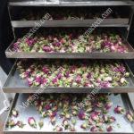 Nhiệt độ sấy nụ hoa hồng như nào để giữ nguyên hình dạng, màu sắc