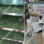 Sấy khô giảo cổ lam bằng phương pháp nào hiệu quả, màu đẹp
